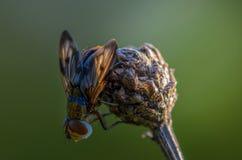 Sova flugan i solen Arkivbilder