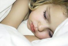 sova för skönhet Royaltyfri Foto