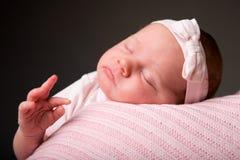 sova för skönhet Royaltyfria Bilder