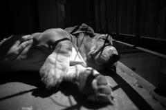Sova hunden av en balkong Royaltyfri Foto