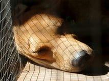 Sova hunden i bur royaltyfri foto