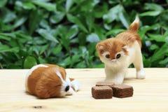 Sova hunden och en katt se rånet med chokladpralin Arkivfoton