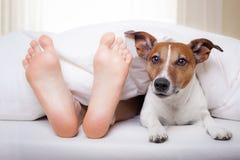 Sova hunden och ägaren Arkivbild