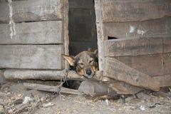 Sova hunden på en kedja Royaltyfria Foton