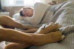 Sova i säng med en husdjurhund royaltyfria bilder