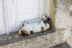 Sova katt arkivfoto