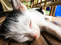 Sova katt royaltyfria bilder