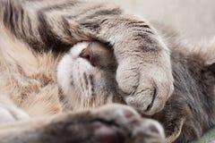 Sova katten Arkivbild