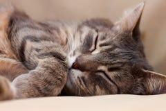 Sova katten Royaltyfri Foto
