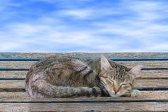 Sova katten Arkivbilder