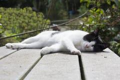 Sova katten på en tabell Arkivbilder