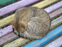 Sova katten på gammal regnbågebänk Arkivbild