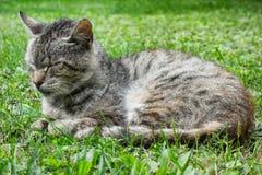 Sova katten på gräset royaltyfri bild