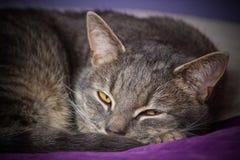 Sova katten på säng fotografering för bildbyråer