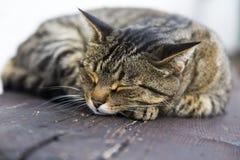 Sova katten på en träbänk Royaltyfri Bild