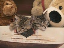 Sova kattungar Arkivbild