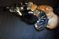 Sova kattungar Royaltyfri Bild