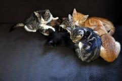 Sova kattungar Fotografering för Bildbyråer