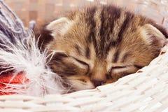 Sova kattunge Fotografering för Bildbyråer