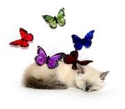 Sova kattunge och färgrika fjärilar royaltyfria bilder