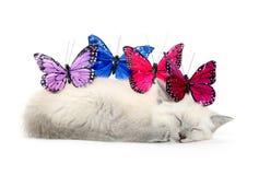 Sova kattunge och färgrika fjärilar royaltyfri foto
