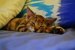 Sova kattungen Arkivfoton