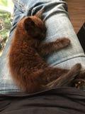 Sova kattungen royaltyfri bild
