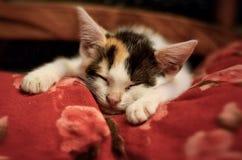 Sova kattungen fotografering för bildbyråer