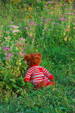 sova nalle för björn Royaltyfri Bild