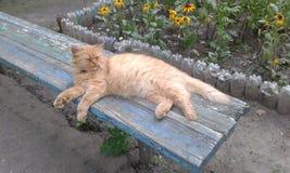 Sova på en röd katt för bänk Arkivbild