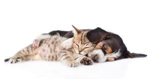 Sova valpen för bassethund som omfamnar strimmig kattkattungen Isolerat på vit Royaltyfria Foton
