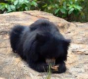 sova white för bakgrundsbjörn Arkivfoton
