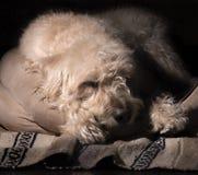 Sovande i hans säng Royaltyfri Fotografi