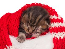 Sovande kattunge Royaltyfria Bilder