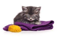 Sovande kattunge Arkivbild