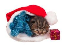 Sovande kattunge Arkivfoto