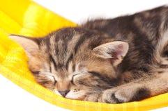 Sovande kattunge Royaltyfri Foto