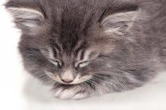Sovande kattunge Arkivfoton