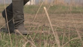 A Soviet soldier walks the steppe. Close-up of feet in boots. World War II. A Soviet soldier walks the steppe. Close-up of feet in boots walking on dry grass stock footage