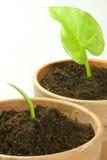 Sow plants Stock Photos