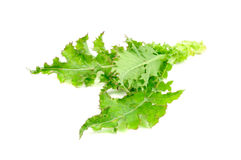 Sow Thistle Plant Stock Photos