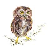 Sowa ptak Obraz Stock