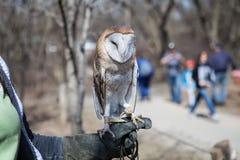 Sowa siedzi na ludzkiej ręce w zoo Zdjęcia Royalty Free