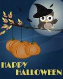 Sowa Szczęśliwy Halloween Obrazy Royalty Free