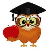 Sowa trzyma jabłka Fotografia Stock
