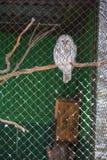 Sowa w zoo Obrazy Royalty Free