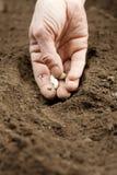sowing Imagen de archivo