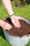 Sowing carrot seeds into container. Stock Photos