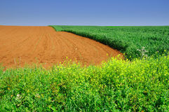 Sowing field. Royalty Free Stock Images