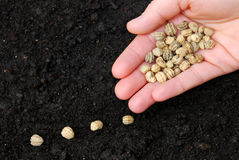 Sowing flower seeds stock images